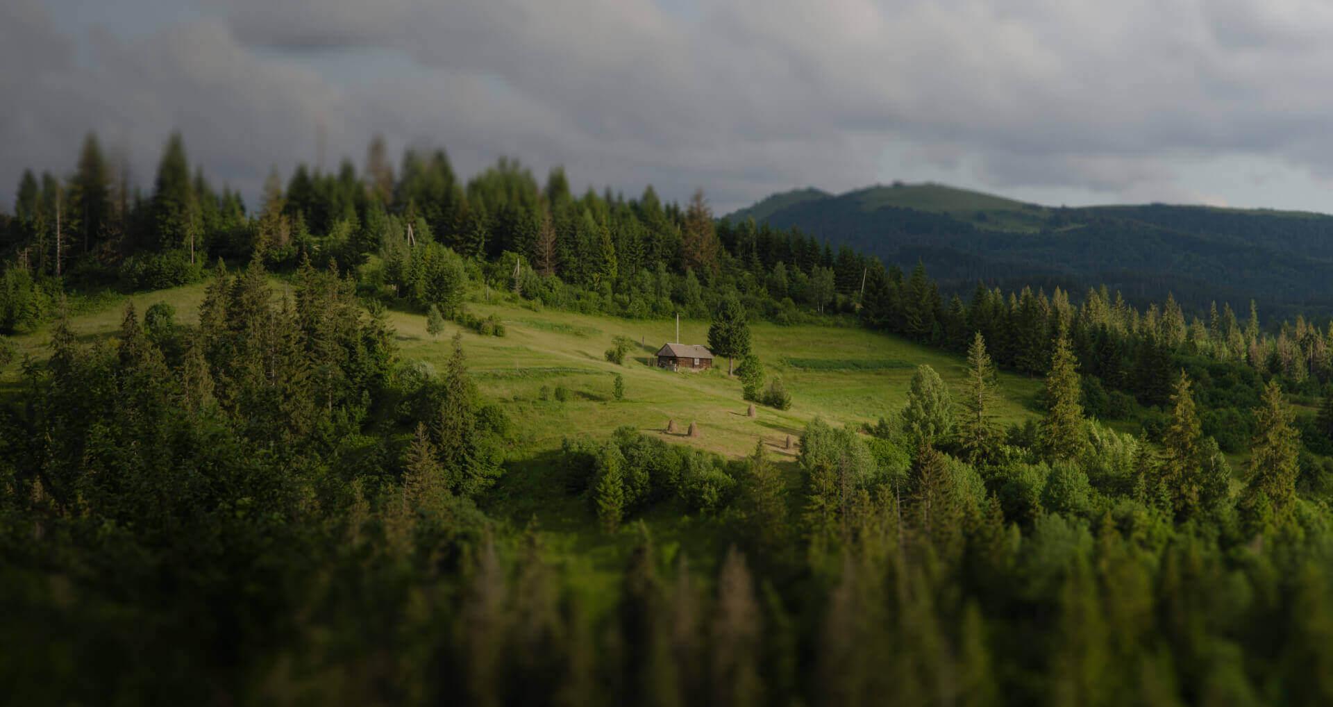 mapowanie terenu zdjęcie lasu w górach