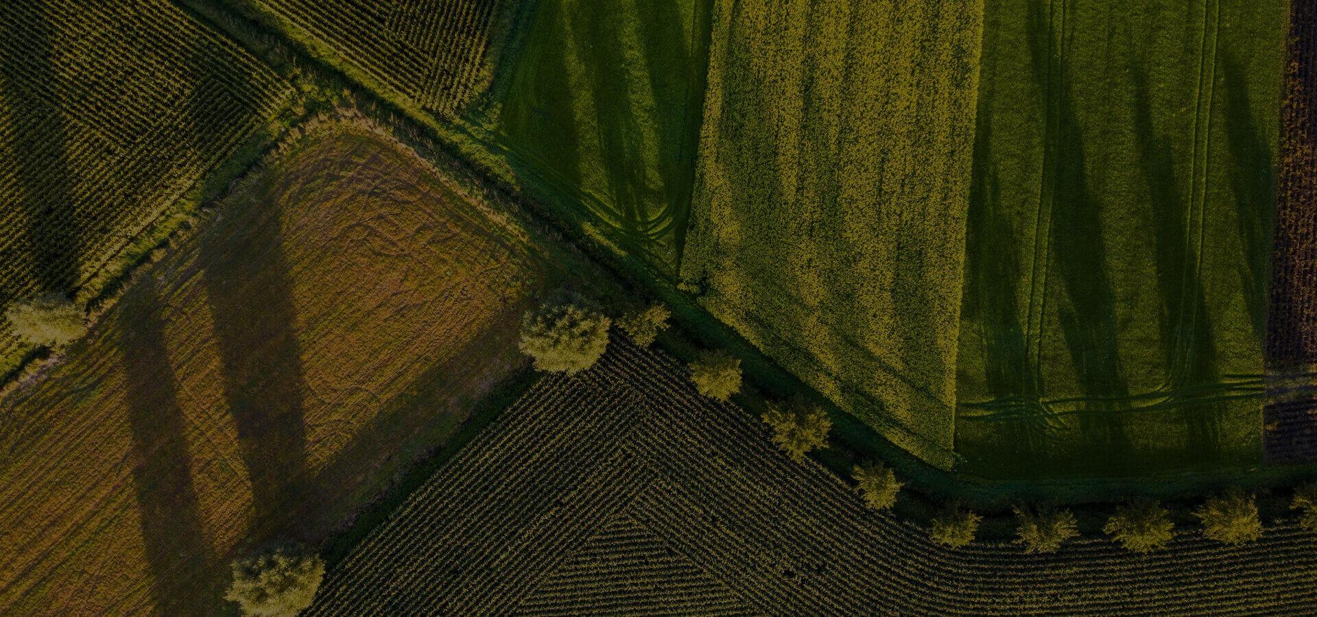 zastosowanie drony dla rolnictwa - zdjęcie zielonych pól